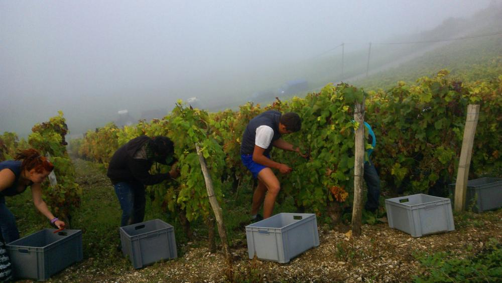 Vendanges monthoux 2014 139