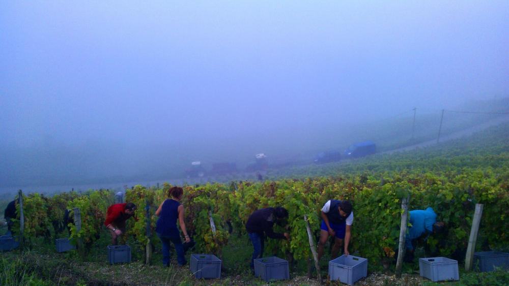 Vendanges monthoux 2014 140