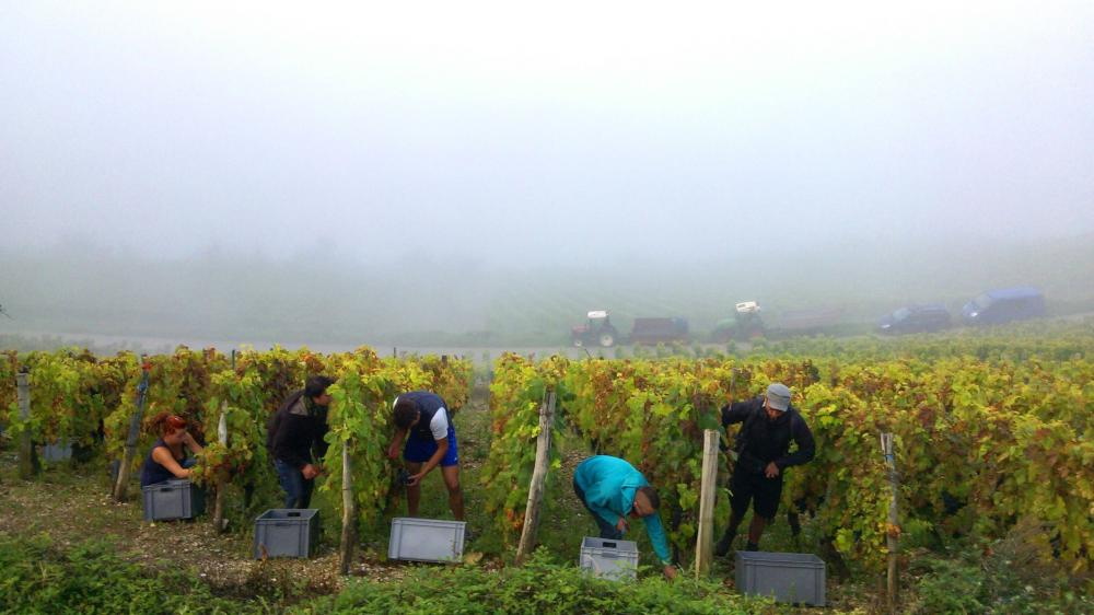 Vendanges monthoux 2014 142