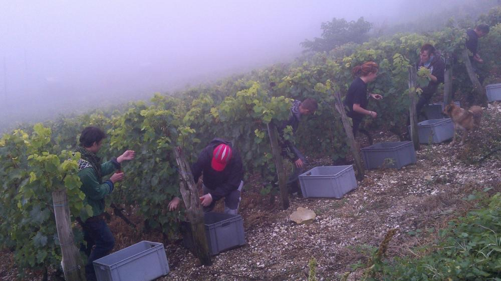 Vendanges monthoux 2014 80