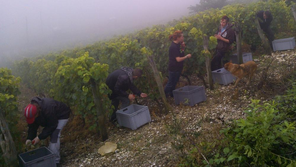 Vendanges monthoux 2014 81