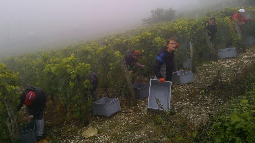 Vendanges monthoux 2014 82