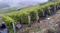 Vins de Monthoux : la Grand'Vigne