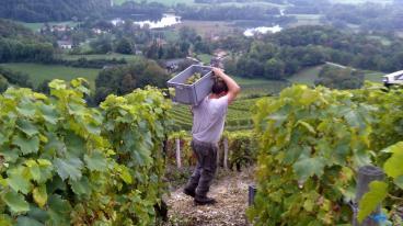 Roussette - Vigne de la Phine