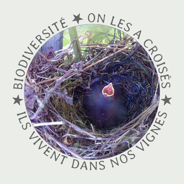 Vogelchen im Nest in den Weinbergen