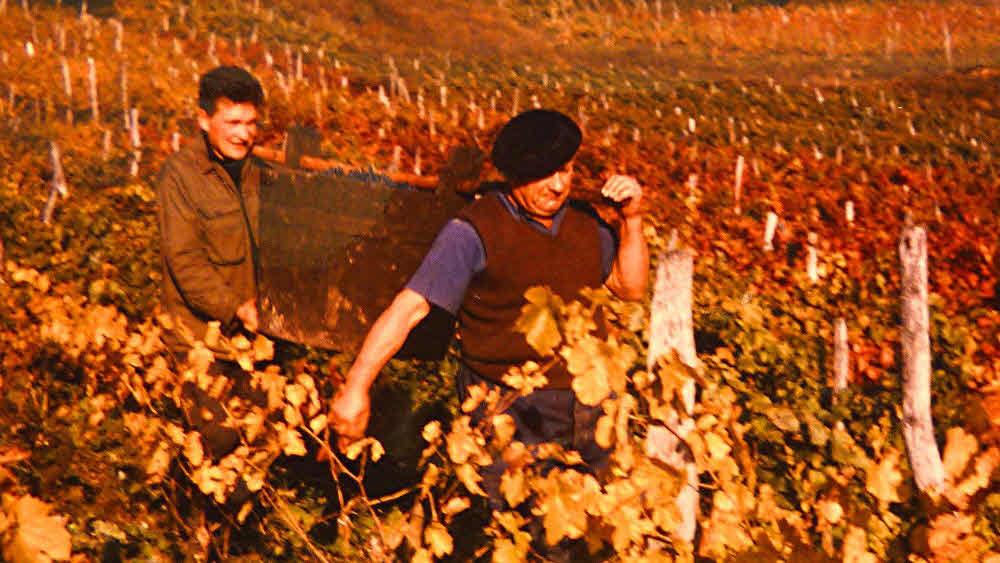 Weinbauer seit vier Generationen