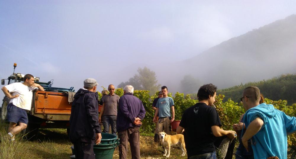 Vendanges monthoux 2014 144