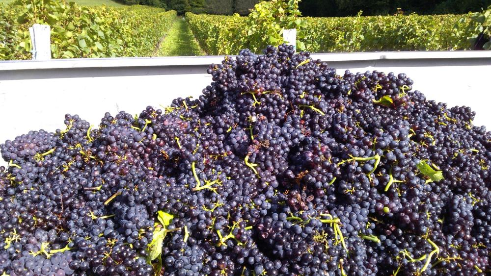 Vendanges monthoux 2014 30