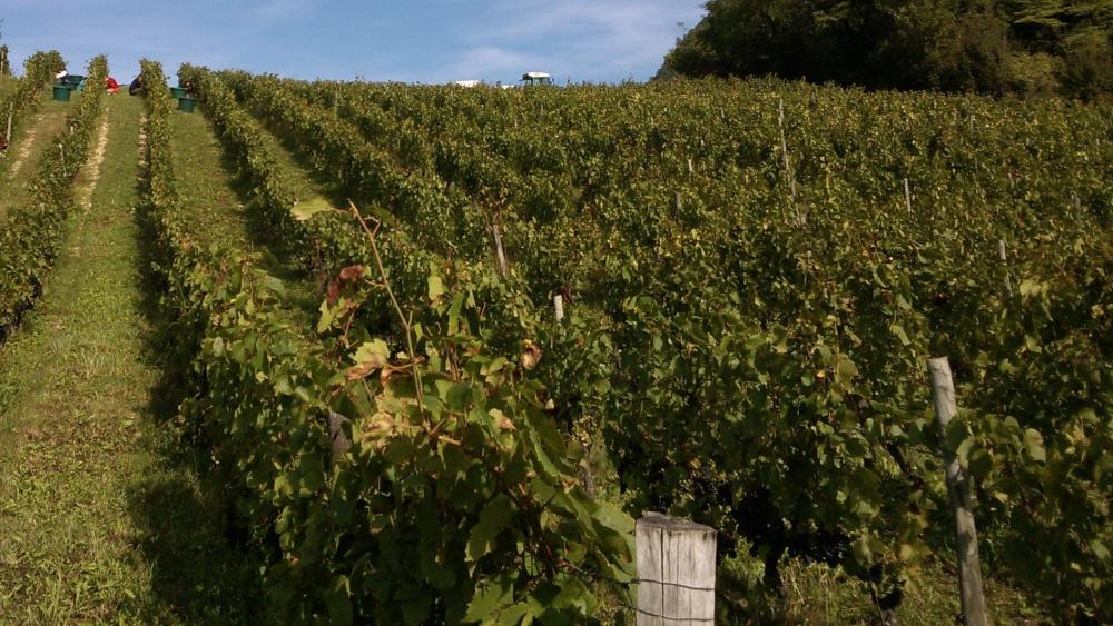 Vendanges monthoux 2014 44