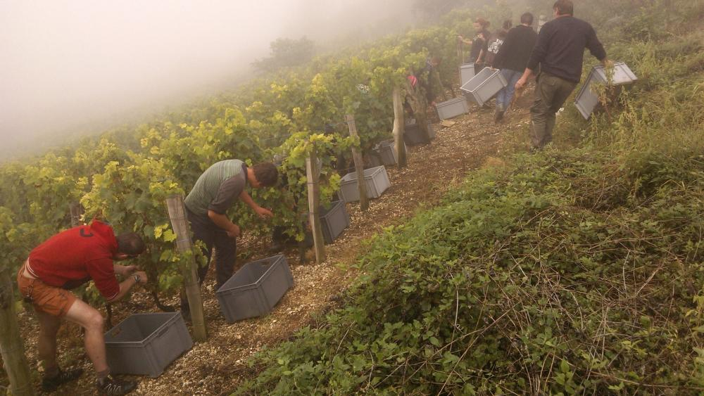 Vendanges monthoux 2014 78