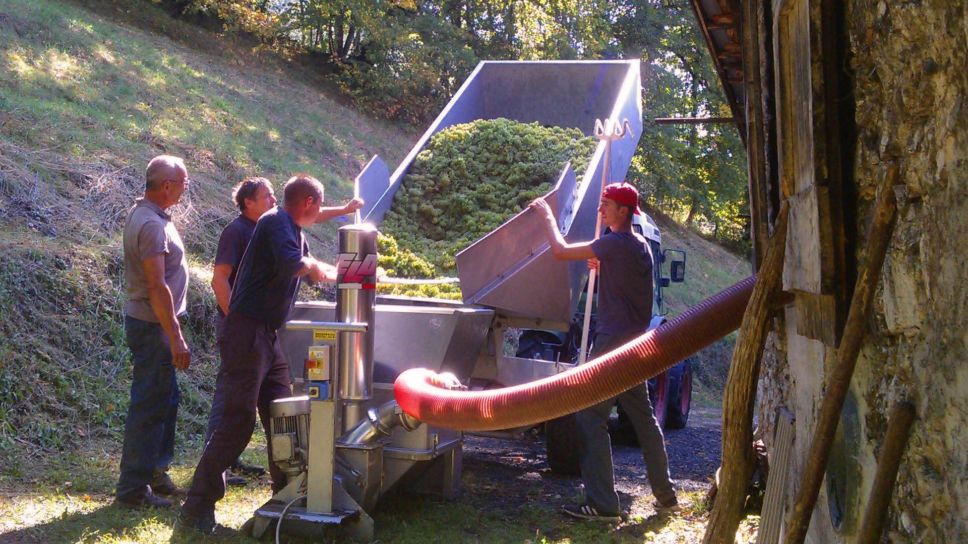 Weinberg in den französischen Alpen